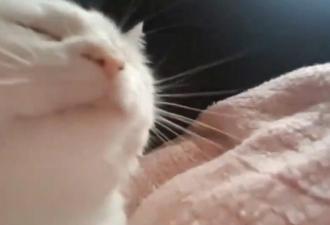 Белый кот в гифке качается под бит и даёт фору людям. Вам не стать круче него, но можно налепить мемов