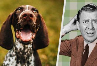 Фототест на внимательность от собаки. Пёс спрятался и свёл хозяйку с ума, но она его нашла - теперь ваш черёд