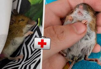Женщина нашла мёртвую мышь и решила её воскресить. Методы Айболита - прошлый век, сработала некромантия