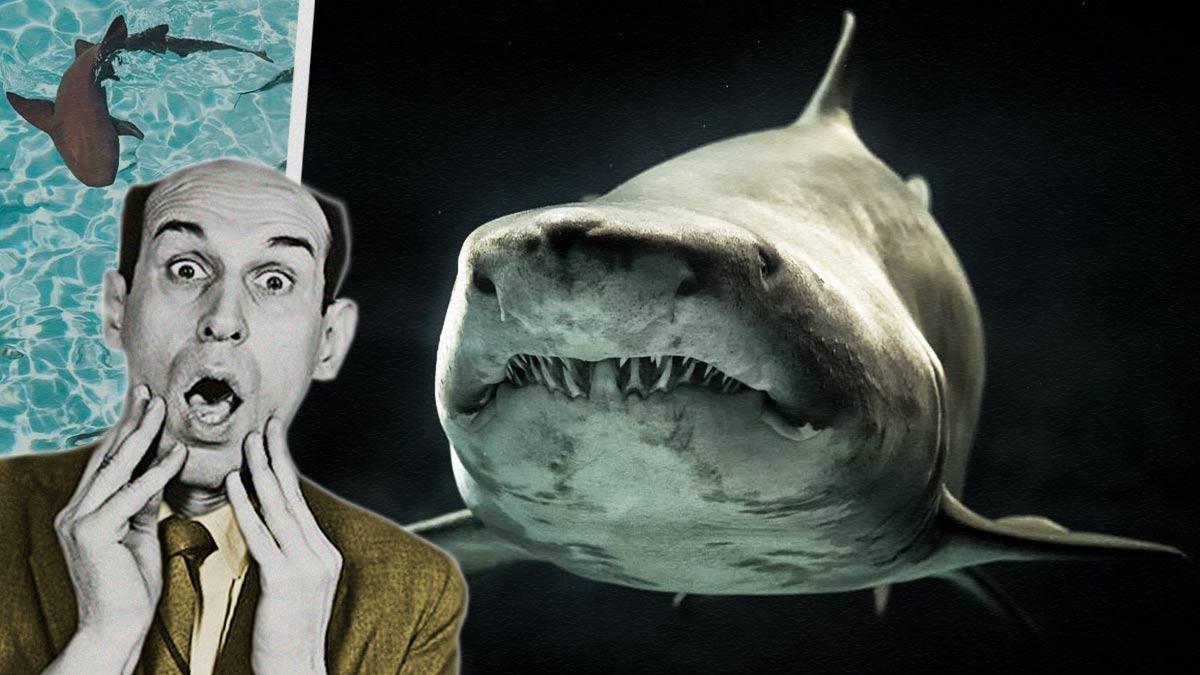 Эксперт развенчал мифы об акулах и сделал только хуже. Бояться их вы всё равно не перестанете, скорее наоборот