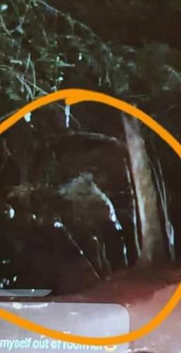 """Видео из ночного леса получилось страшнее, чем """"Ведьма из Блэр"""". Но охотники за приведениями остались целы"""
