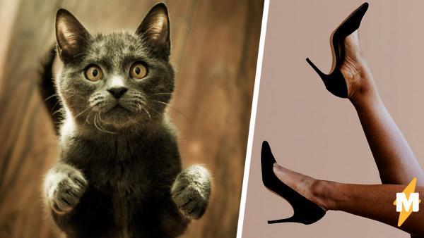Как бы выглядели коты не с лапами, а с ногами? Парень (случайно) узнал и понял: такого мир не выдержит