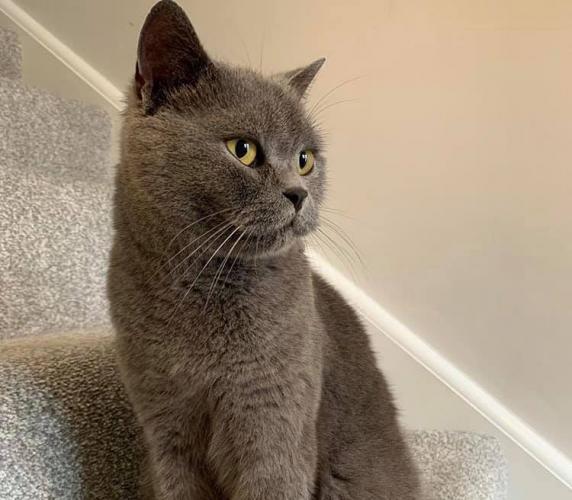 Женщина оплакивала кота, пока не увидела запись с уличной камеры. Она не ожидала от него такого предательства