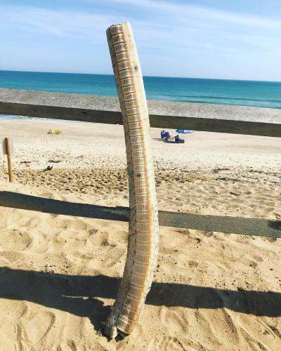 Береговая охрана нашла 1,5 метровый скелет, выброшенный на пляж. Ученые сказали, чей он, но не кто его убил