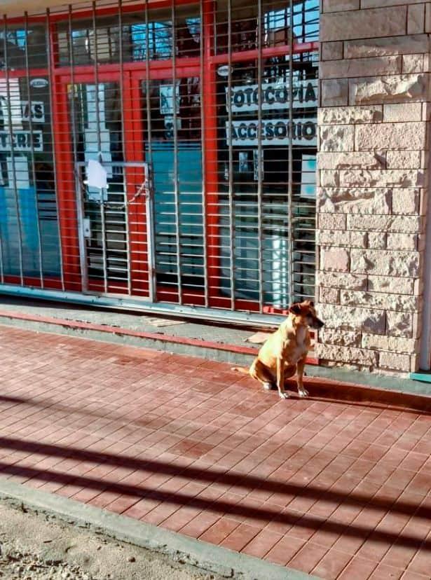 Пёс неделю ждёт хозяйку возле её работы. А местные не знают, как объяснить собачке, что она больше не придёт