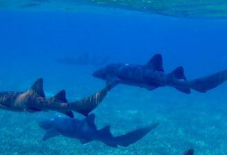 Парень кинул свою девушку в водоём с акулой ради веселья. Но перед цунами хейта весельчак не устоял