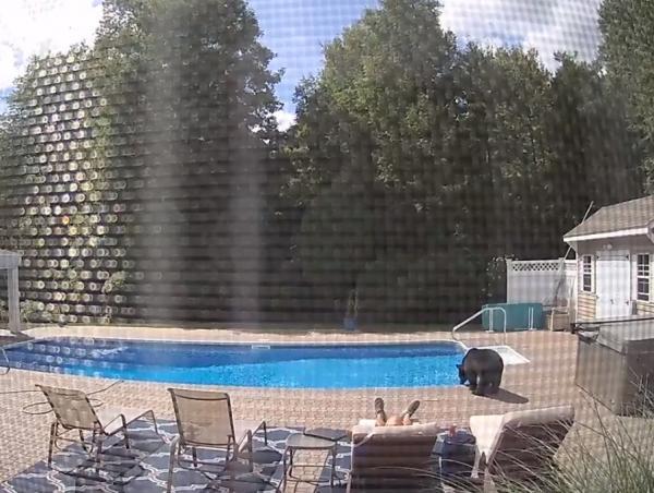 Мужчина мило отдыхал у бассейна, когда почувствовал нежное прикосновение. Думал, жена, но правда была страшнее