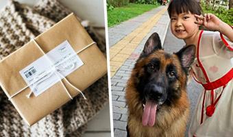 Пёс ведёт себя как человек, запертый в теле собаки. Стоит хозяевам уйти из дома — он перестаёт быть животным