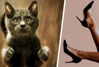 Что, если бы у котов были не лапы, а ноги? Парень (случайно) узнал и понял: таких аниморфов мир не выдержит