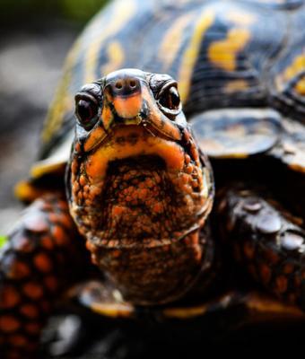 Майк Вазовски существует, но в образе черепахи. Доказано циклопом — возможно, самым странным существом 2020-го