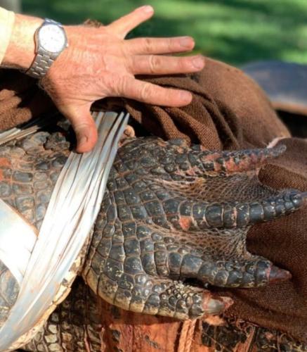 """Рейнджеры поймали крокодила, а кажется, что царя рептилий. Ведь этому гиганту пора объяснять свою """"огромность"""""""