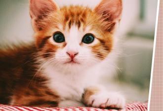 Хозяин попросил людей найти кота на фото - и они сломались. Ушастый ниндзя стоит на виду, но видят его единицы