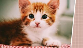 Хозяин попросил людей найти кота на фото — и они сломались. Ушастый ниндзя стоит на виду, но видят его единицы