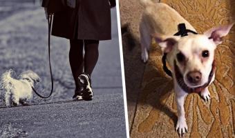 Хозяйка выгуляла пса без поводка, но питомец об этом не знал. Итог: собака забагована, зато видео смешное