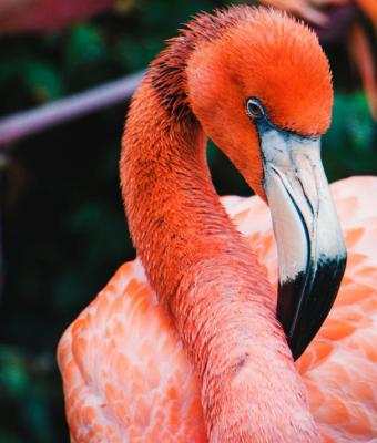 Зоопарк показал, как едят фламинго. Ради ужина они переворачивают всё с ног на голову, и это даже не метафора
