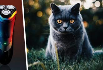 Кот прошёл через стрижку и стал не кошкой, а мемом на ножках. Но фото других мурок показывают: ему ещё повезло