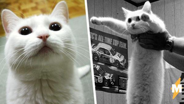 F в чат, Длиннокот - всё. Люди узнали о смерти кота с пикчи и сделали всё, чтобы сохранить его мемное наследие