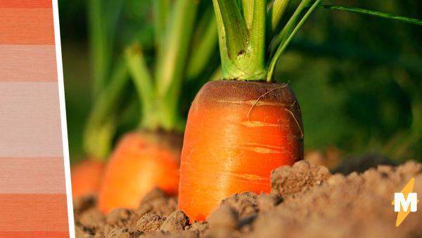 Посади овощи, будут свои продукты, говорили они. Парень так и сделал, но его урожай - кошмарный сон агронома