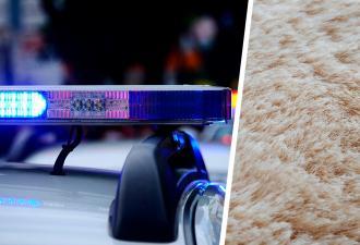 Зоозащитники нашли самое пушистое существо в мире. Но чтобы узнать, кто это, им пришлось состричь 20 кг шерсти