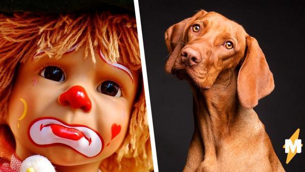 Что на картинке: собака или клоун? В твиттере появилась самая пугающая иллюзия со времен сине-золотого платья.