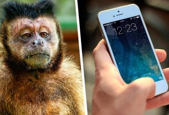Парень нашёл пропавший телефон вместе с фото вора. Но похитителю суд не страшен — он живёт по законам джунглей