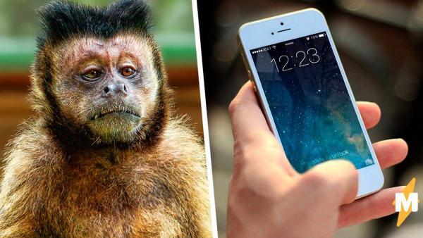 Парень нашел свой украденный телефон вместе с селфи вора. Похитителю ничего не будет, ведь он родом из джунглей