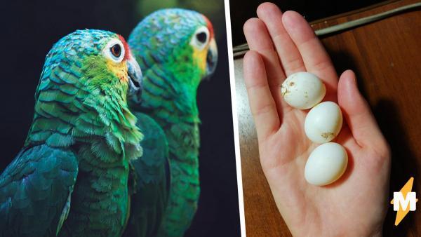 Девушка рассказала, как ей пришлось стать матерью попугаев. Сложно ли это? Ещё как