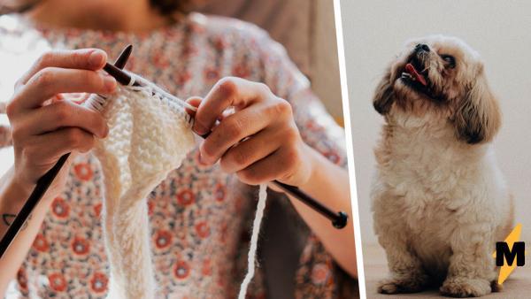 Реддитор показал, что можно сделать из шерсти линяющей собаки. Спойлер: теперь у него есть два пёселя