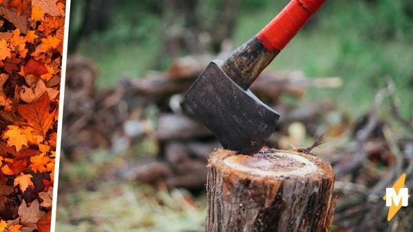 Старик застрял под деревом и 100 часов косплеил Беара Гриллса. Герой выжил, но лучше не знать, что он ел и пил