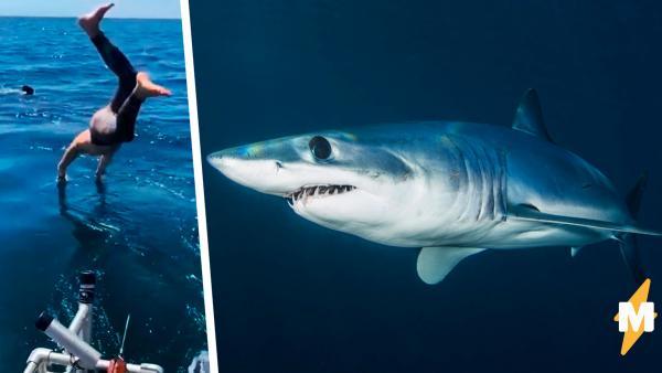 Герой нырнул к акуле, чтобы доказать: не все они опасны. Но перепутал вид рыбы, а что было дальше - на видео