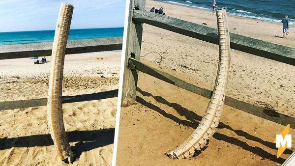 Береговая охрана нашла 1,5-метровый скелет, выброшенный на пляж. Учёные поняли, чей он, но не кто его убил