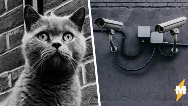Хозяйка днями искала кота, пока не увидела записи с уличных камер. Такого предательства она от него не ожидала
