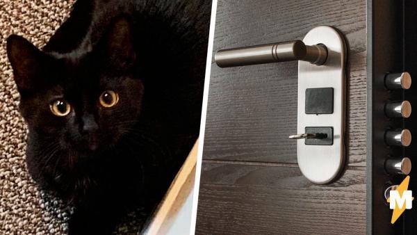 Кот лишился самого дорогого в жизни и решил мстить.
