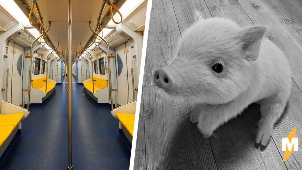 Минипиг заехал в метро на мяче и вверг людей в недоумение. Пришлось присмотреть к видео, чтобы разобраться