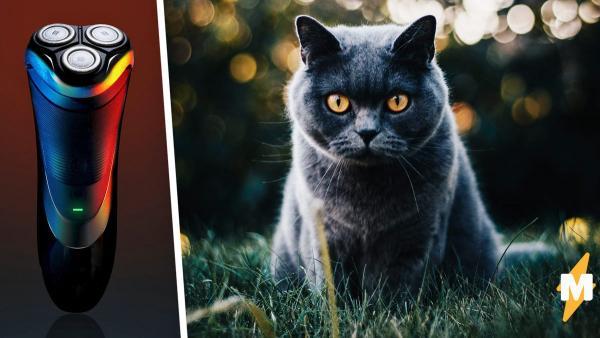 Кота постригли, и вместо кошки вышел мем на ножках. Но у людей нашлись ещё более упоротые фото мурок