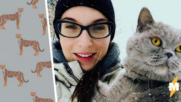 Хозяйка год вычёсывала кошку и получила «клона». Видео процесса умиляет и пугает людей (даже фанов артхауса)