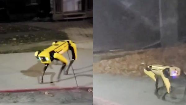 Девушка вышла погулять, но столкнулась с монстром. Это не робот из «Чёрного зеркала», а детище Boston Dynamics