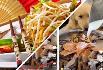 Из Китая по Сети идёт опасный тренд: люди кормят собак. Звучит хорошо, но есть нюанс - и он в количестве еды
