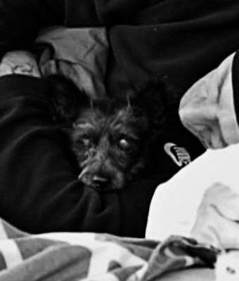 Бездомный лишился собаки и заплакал, когда полиция её нашла. Не от радости: такое воссоединение — хуже потери