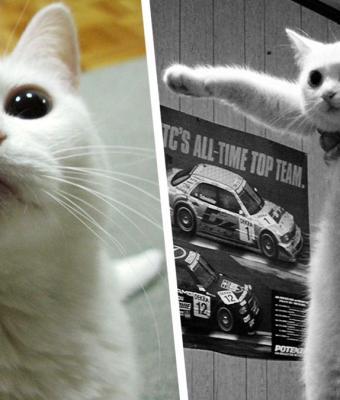 F в чат, Длиннокот — всё. Люди узнали о смерти кота с пикчи и сделали всё, чтобы сохранить его мемное наследие