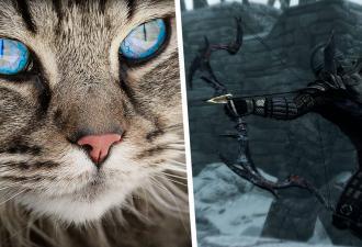 Люди увидели кошку со стрелой в боку и испугались. А зря: их обманула оптическая иллюзия (и чупа-чупс)