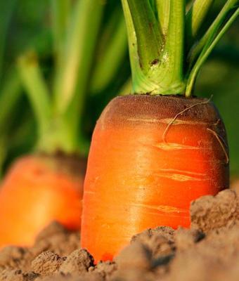 Посади овощи, будут свои продукты, говорили они. Парень так и сделал, но его урожай — кошмарный сон агронома