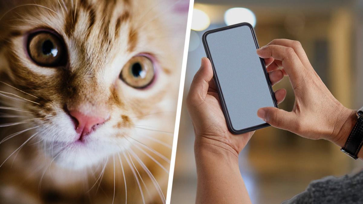 Хозяин каждый день звонил кошке по видео, но пропустил один вечер. И её реакция заставит плакать даже Хатико