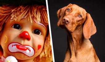 Люди вгляделись в фото пса, а там – клоун. Да, это оптическая иллюзия, и она ещё круче бело-золотого платья