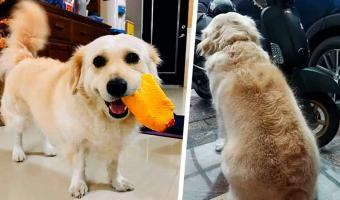 У пса суперсила — останавливать взглядом хозяина. Минус только один: этим навыком он лишает человека работы