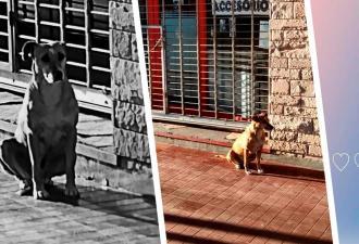 Собака неделю ждёт хозяйку возле её работы. А люди не знают, как объяснить псу, что она больше не придёт
