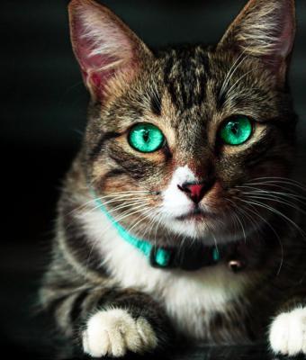 Люди увидели, что происходит с глазами икающей кошки. Это механизм выживания, он выглядит магически и комично