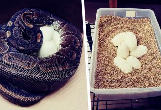 Змея 15 лет жила без самца, но завела потомство. Учёные озадачены, а феминистки рады, и понятно почему