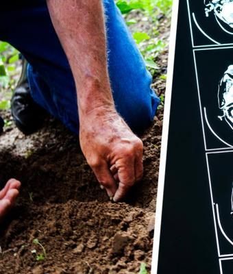Садовник ухаживал за растением, но хобби стоило ему жизни. Цветок оказался убийцей и съел его мозг — буквально