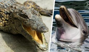 Год 2020 не щадит даже крокодилов. Аллигатор на видео стал дельфином — но в дельфинарии не выступает